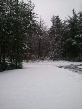 Snowy Woods (NY)