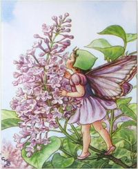 little lilac fairy