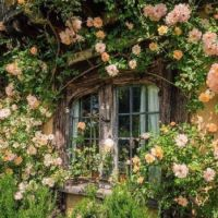 Okno_Window