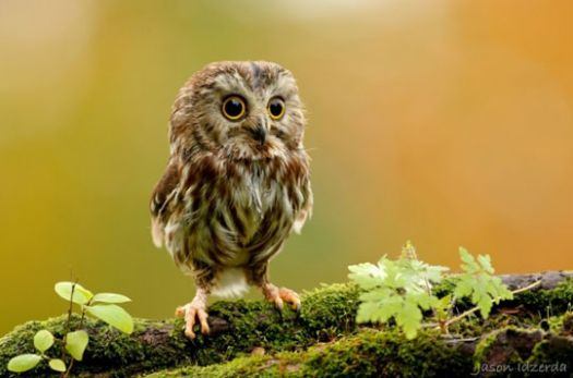 The cutest baby owl you will see today