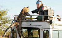 This is why you stay inside your car in a Game Reserve.