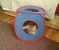 Mr. Red, lurking in the kitty cube