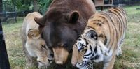 best-friends-lion-and-tigers-and-bears-oh-my-1024x512