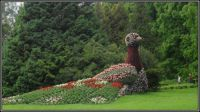 Páv z květin - ostrov Mainau...   Peacock of flowers - Mainau Island ...