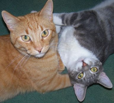 Max & Stryder