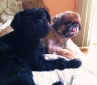 My Dogs Emmie and Otis