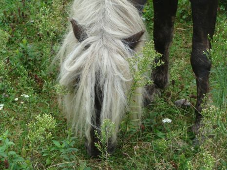 wild pony at Mount Rogers