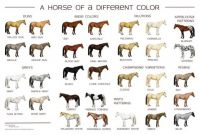 horse_colors_poster_by_siakhuinn-d7fmj6g