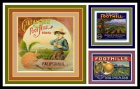 Vintage Fruit Crate Labels Depicting the Foothills