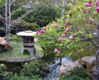 San Diego Zoo - Japanese Garden Pink Magnolia