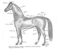 Theme: horses