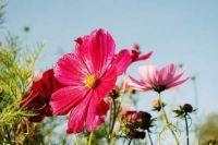 flower_bouquet_leaf