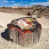 225 million year old petrified Opal tree trunk in Arizona