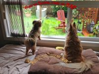 Rusty and Adele watching for squirrels