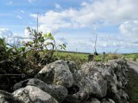 Irish country road                                     1335-001