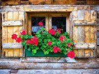 Window Box Display 2