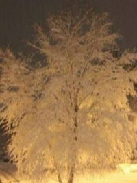 Tree by car lights