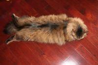 Flat (cat)fish