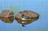 Wolfreys Pond, Lewisporte, Newfoundland and Labrador, Canada