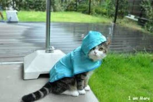 And my mom so loved me, she made me a raincoat for those icky, rainy days!!
