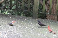 ThreeSpecies