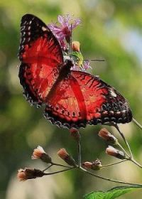 amazing butterfly color