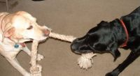 Willow & Max play tug-of-war