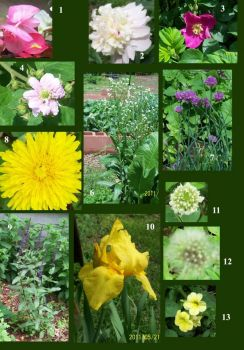 Can you name all my May bloomers?