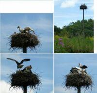 Vondelpark storks update #1