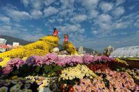 Amazing-flower-display