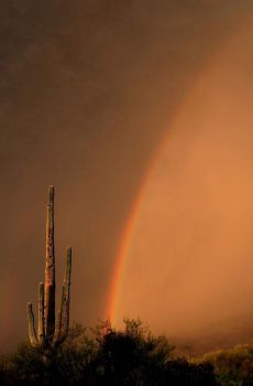 Rainbows in the Dust