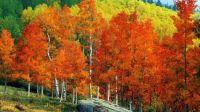 The beauty of autumn!