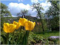 Větrný jarní den  -  Windy spring day