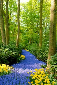 What a beautiful path.