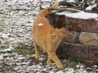 Bob the Stray Cat