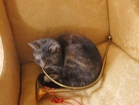 Cat in a horn