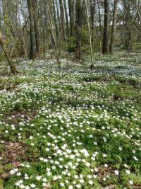 Frühling in Bayern