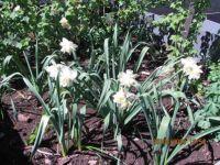 Jaro na záhonku