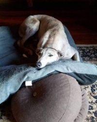 I made my bed and now I'm going to lie in it (Jock the Greyhound)