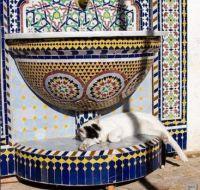 Moroccan Cat Nap