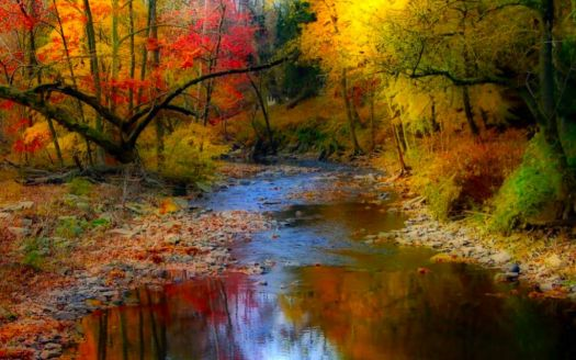 Autum Stream
