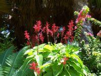 Madeira Flora