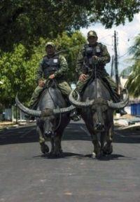Border patrol :-)