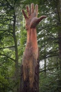 This was the Tallest Tree in Wales.....
