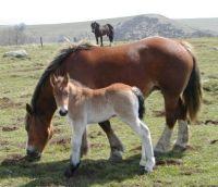 a good sturdy foal, just like mama