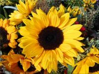 Sunshine greetings to all
