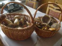 houby v pátek
