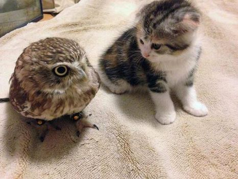 Cat and Owl meeting for the first time