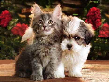 Kittens & Puppies..How cute..!!