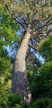 Tree in Golden Gate Park